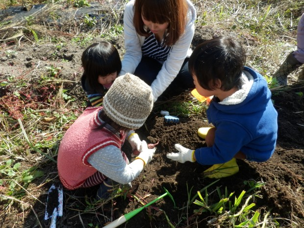 芋掘り、くるみっこ、岡山、美作、梶並、自主保育、保育、幼稚園、子育て、自然、遊び、プレーパーク
